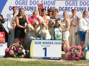 Ogre29